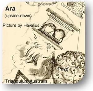 Ara-300x292